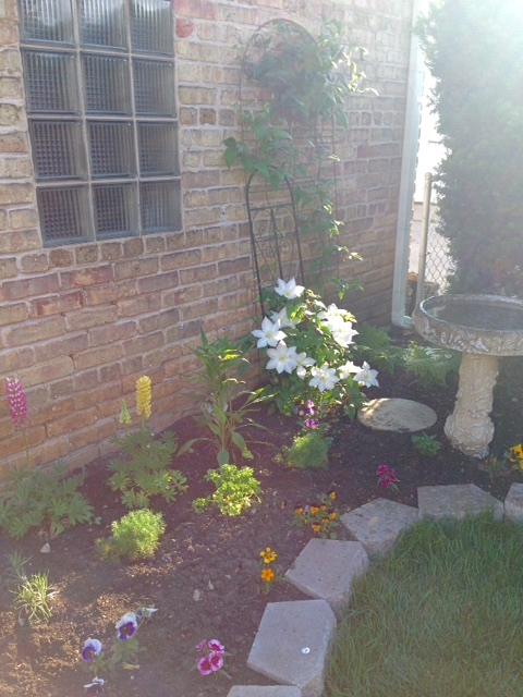 Here's the new butterfly garden, finally filling in.