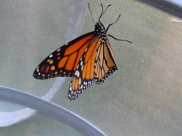 This was one of the nine butterflies.