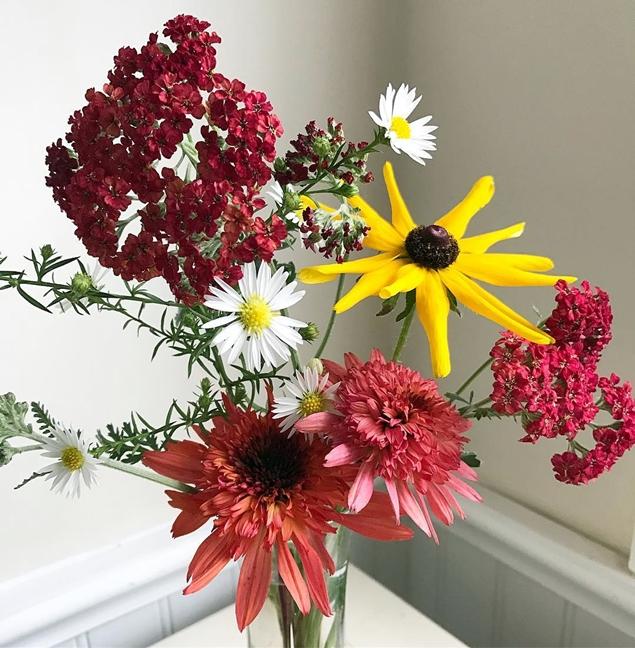 Red Yarrow, Heath aster, black-eyed susan, and raspberrry truffle echinacea